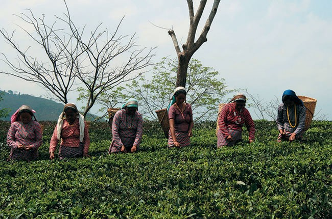 02-Tea-Pickers-at-Glenburn-d43652d35e