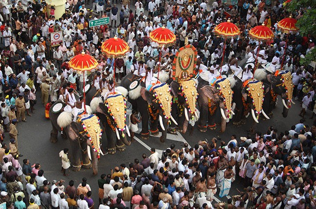 06-Culture-THRISSUR-Gold-caparisoned-elephants-in-Pooram-Festival-in-Thrissur-April-2010-8115f01171