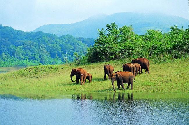 09.Periyar wild life santuary-f68c5bd1ad