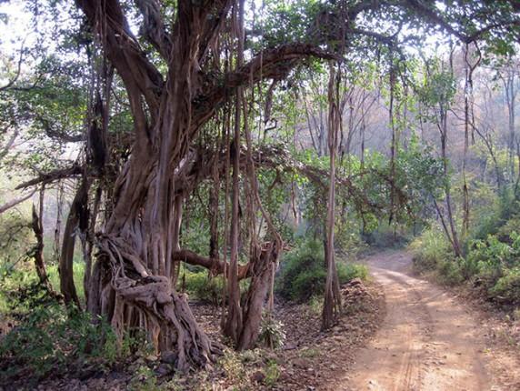 05-Ranthambore-forest-632b56c752