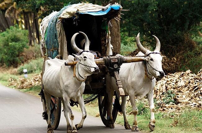 05-bullock-cart-b1d68d655e