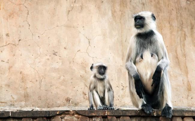 Madhya-Pradesh_shutterstock_102816920-bg1080