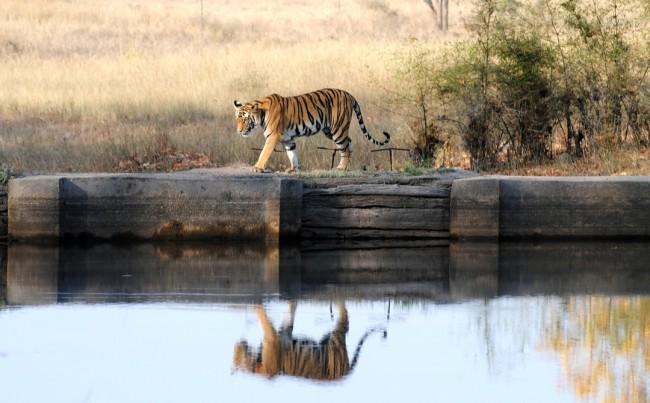 Wildlife_shutterstock_112208996-bg1080